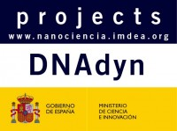 DNAdyn Single molecule studies of the mitochondrial DNA repliciation dynamics